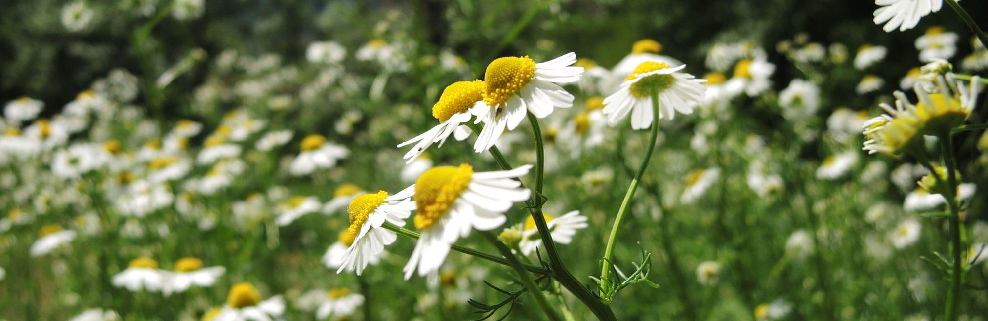 02-Blumen-Naturheilpraxis-Margret-Madejsky-Muenchen