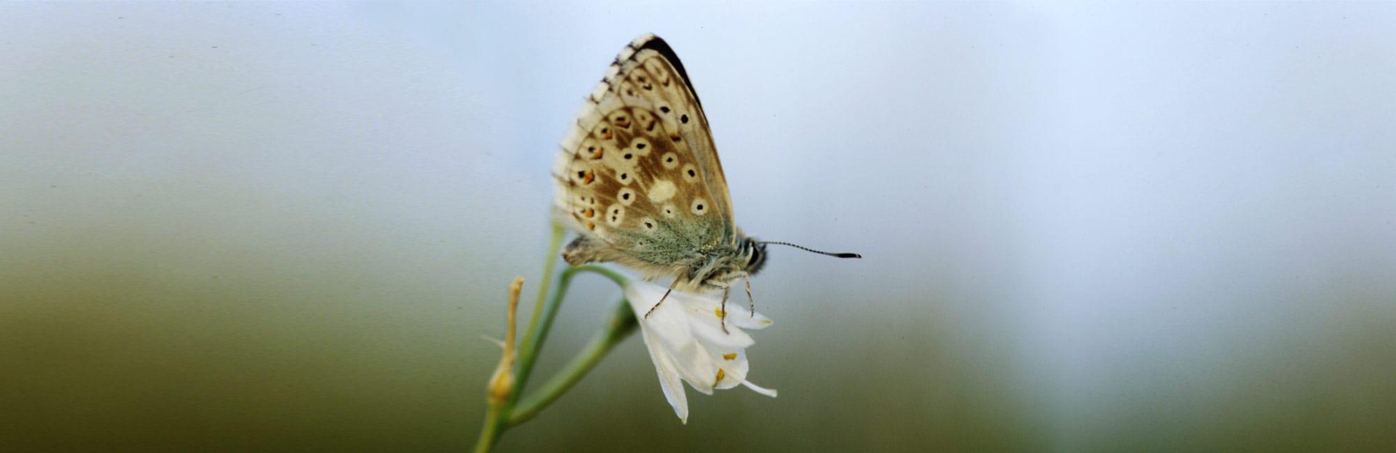 06-Schmetterling-Naturheilpraxis-Margret-Madejsky-Muenchen